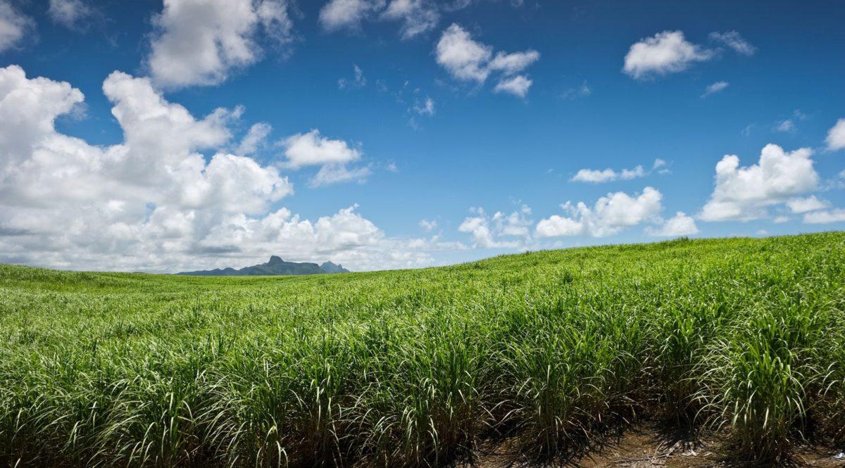 Rhodes sustainable - Sugarcane